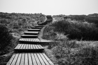 The Wooden Path   Sylt [6]