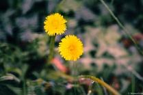 LITTLE-FLOWERS-S-2