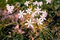 LITTLE-FLOWERS-S-3