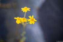 YELLOW-FLOWER-S-2