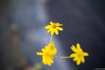 YELLOW-FLOWER-S-3